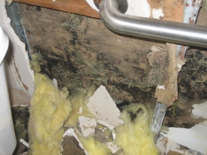 Black Toxic Mold Spores Schools